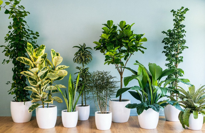 Cây xanh giúp thanh lọc không khí, thêm sự tươi mới tràn đầy sức sống cho nhà bạn